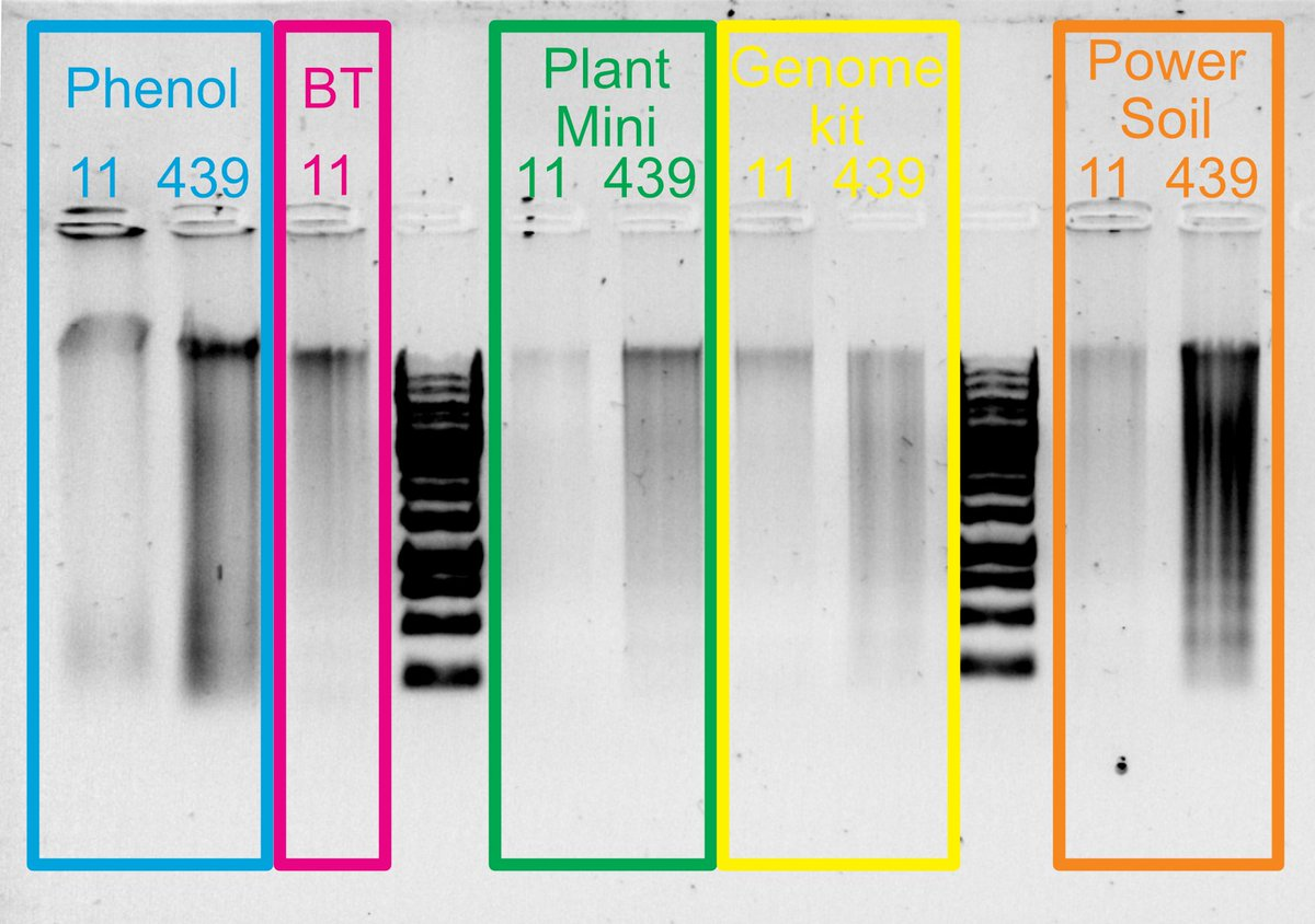 Jess Gordon On Twitter I Have Now Tried 9 Diff Methods Of Dna Extraction For Deepsea Coral Here Are The Best 5 Looks Like Plant Mini Kit From Qiagen Might Be Best