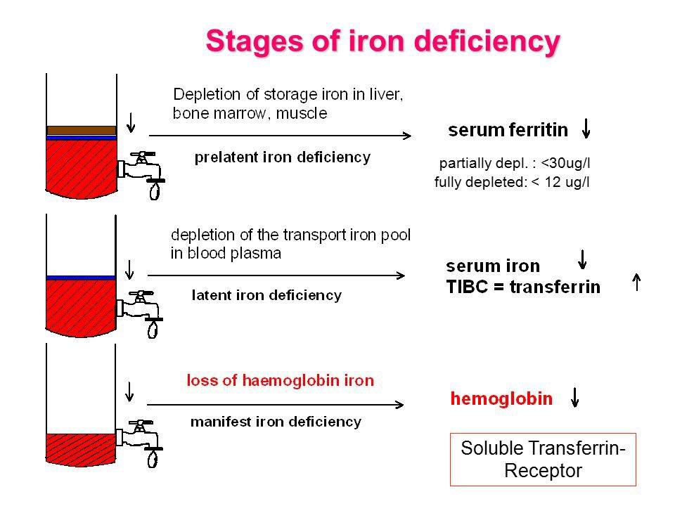 راح أتكلم عن تحاليل الحديد Iron Profile Testوطريقة التشخيص أول شي لازم نعرف المصطلحات هذي Ironالحديد Transferrinالترانسفرين ناقل للحديد F Twitter Thread From Aisha Aish6a23 Rattibha