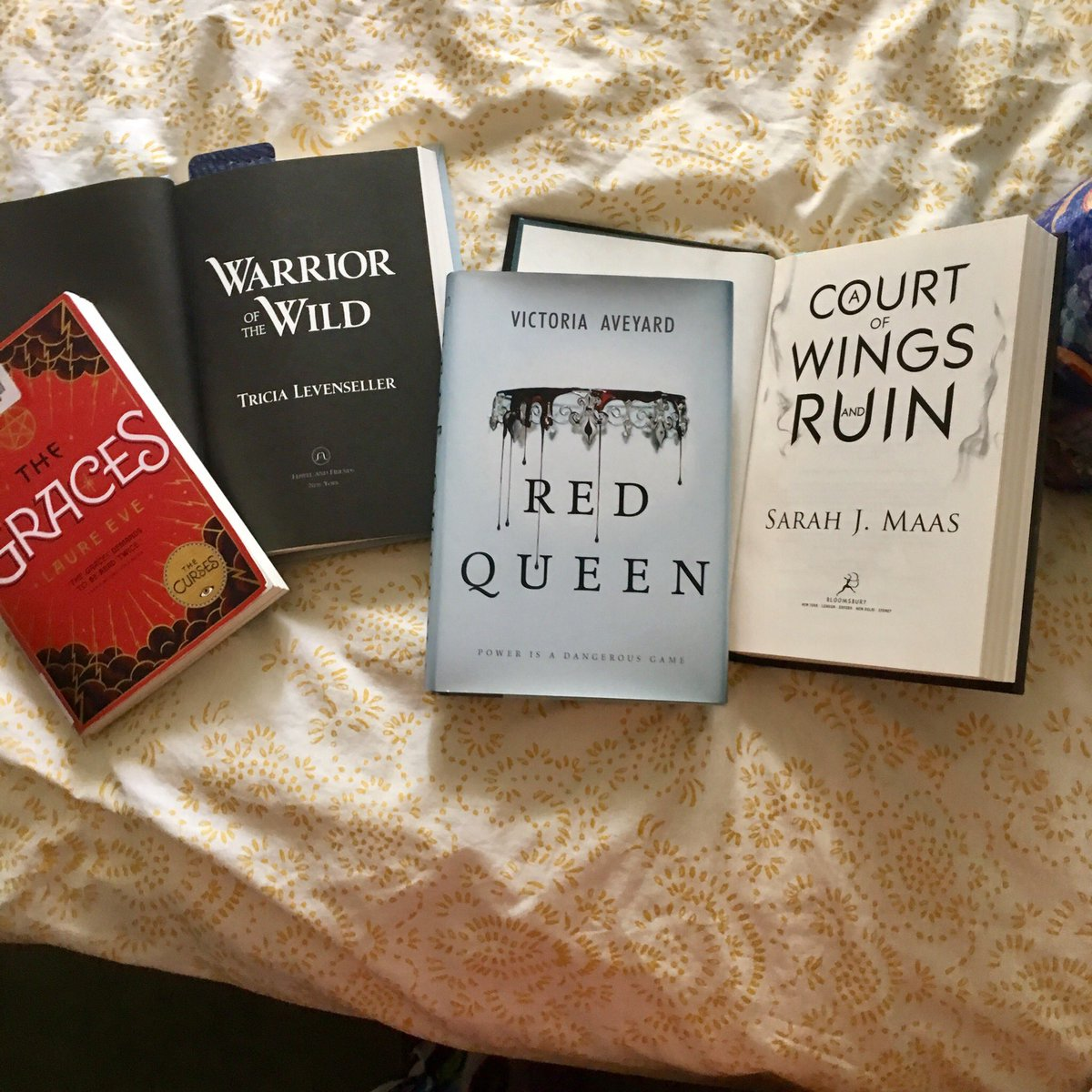 I cannot deciiiiide   #books #thegraces #laureeve #warriorofthewild #tricialevenseller #redqueen #victoriaaveyard #acourtofwingsandruin #sarahjmaas <br>http://pic.twitter.com/Xh6RrPe5V2