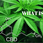 What is CBD? Definition, Benefits, Legality and Where To Buy? Things To Know!😇💚 https://t.co/sM5QKq7zCu #cbd #cbdoil #whatiscbd #cbdbenefits #iscbdlegal #buycbd #hemp #hempoil #cbdfable #cbdheals #cbdcures #cbdhelps #cbdforlife