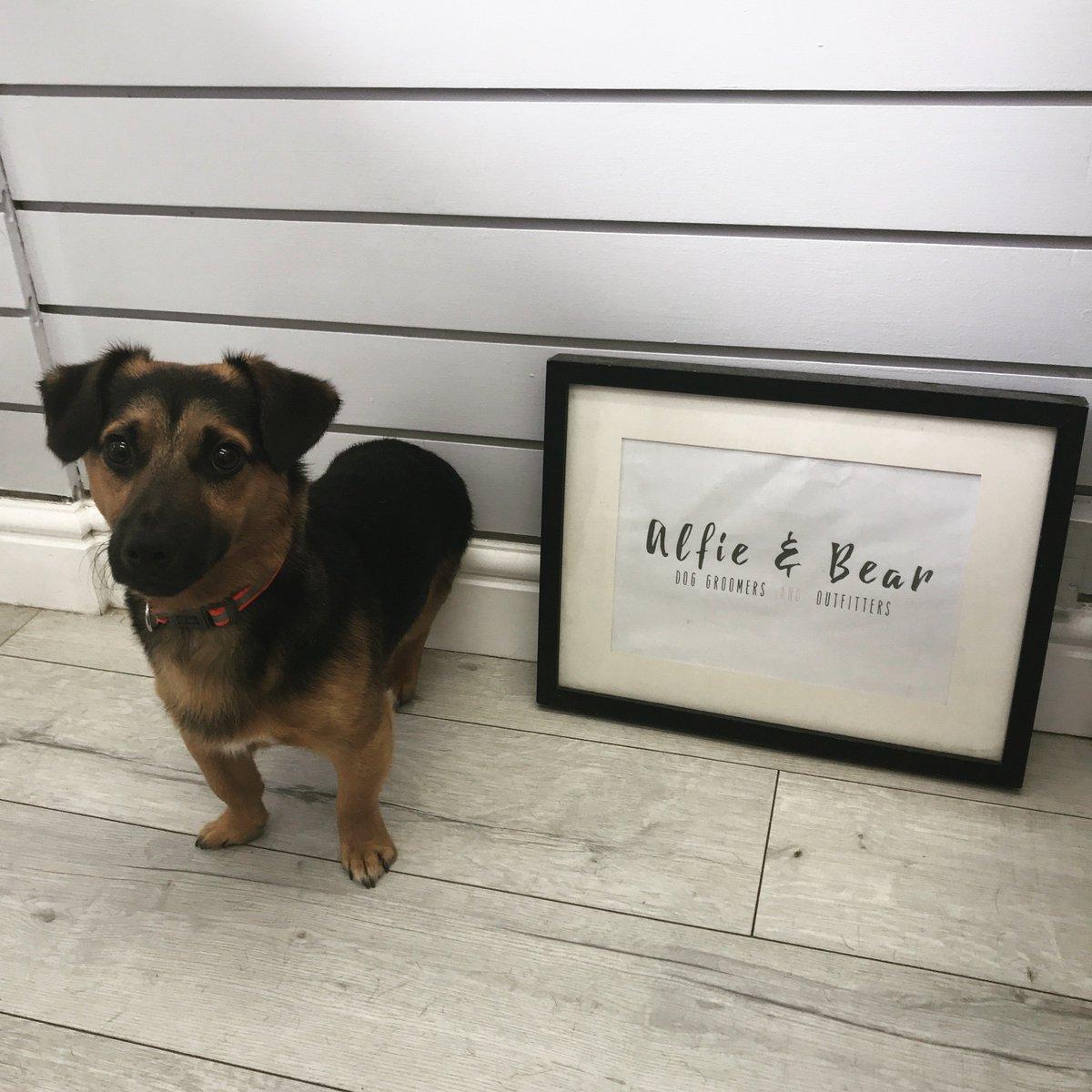 We Met The Lovely Vaz This Week    #DogGroomer #DogGrooming #JackRussell #DogSpa #DogGroomingSalon #DogOfTheDay  #DogsOfTwitter #DogLovers #NEFollowers #NewcastleUponTyne<br>http://pic.twitter.com/ntIN98GejL