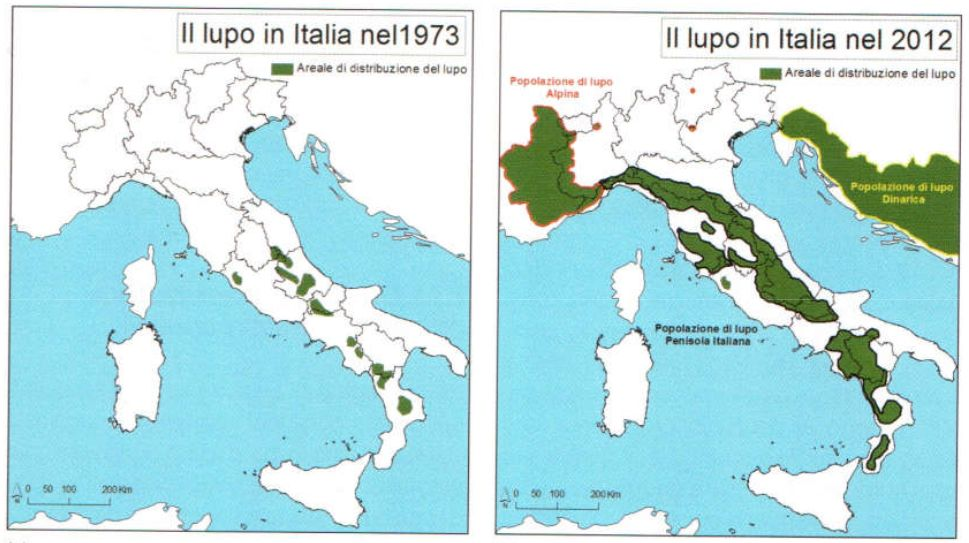 Map shows the distribution of wolves in Italy in 1973 and 2012. Wait, this isn't a bad news story? Source: buff.ly/2jI9c03