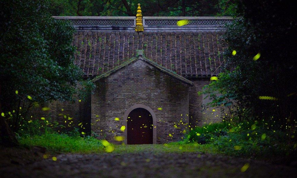 Fireflies light up the midsummer night sky above the Linggu Temple in Nanjing, E China's Jiangsu Province