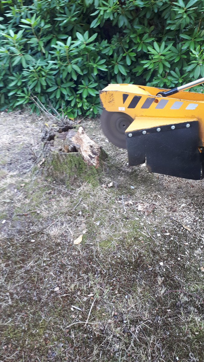 Essex Tree Stump Grinding out Oak tree stumps near Margaretting, Chelmsford, Essex. #treestumpgrinding #treestumpremoval…