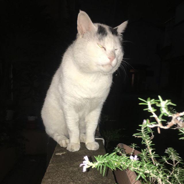 暗黒面の顔 Dark Face #uchinonekora #nanakuro #neko #cat #catstagram #kachimo #猫 #ねこ #うちの猫ら https://ift.tt/QJLvxq https://ift.tt/2Se6ufB