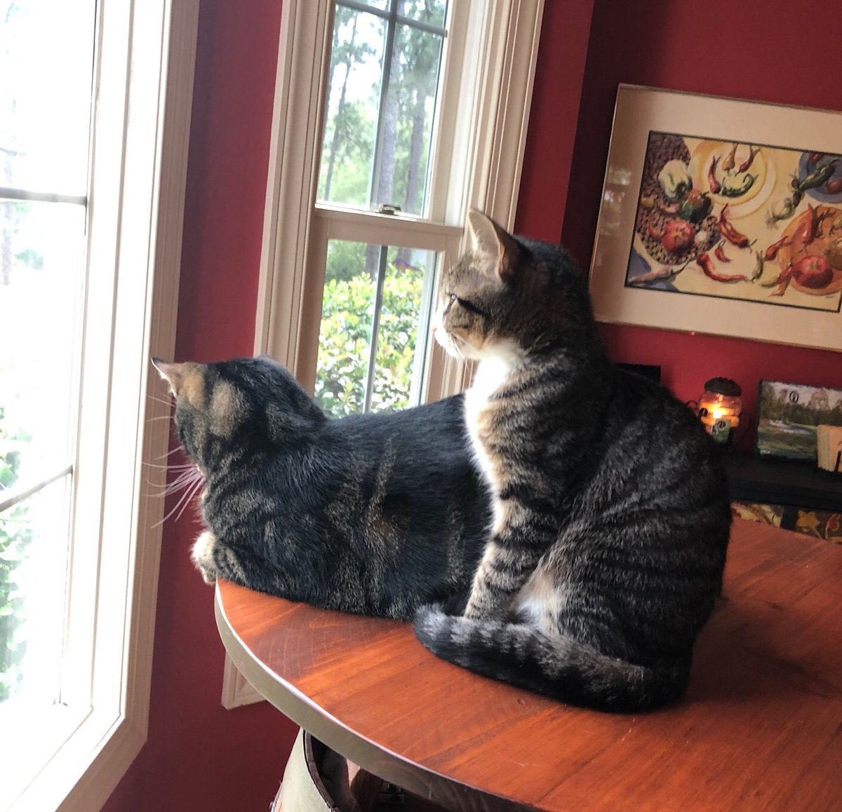 Our kitten Mulligan and Cleveland have become fast friends and enjoy watching birds and squirrels   #Caturday<br>http://pic.twitter.com/9mTzwXm3jT