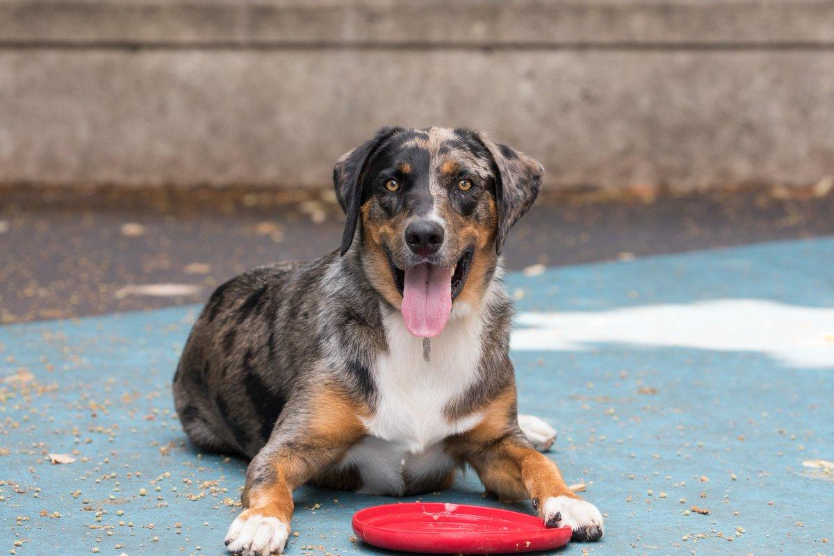 Dog days of summer at Hudson River Park #NYC<br>http://pic.twitter.com/VaudoYtoF9