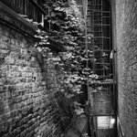 Image for the Tweet beginning: Tree struggles in alley on