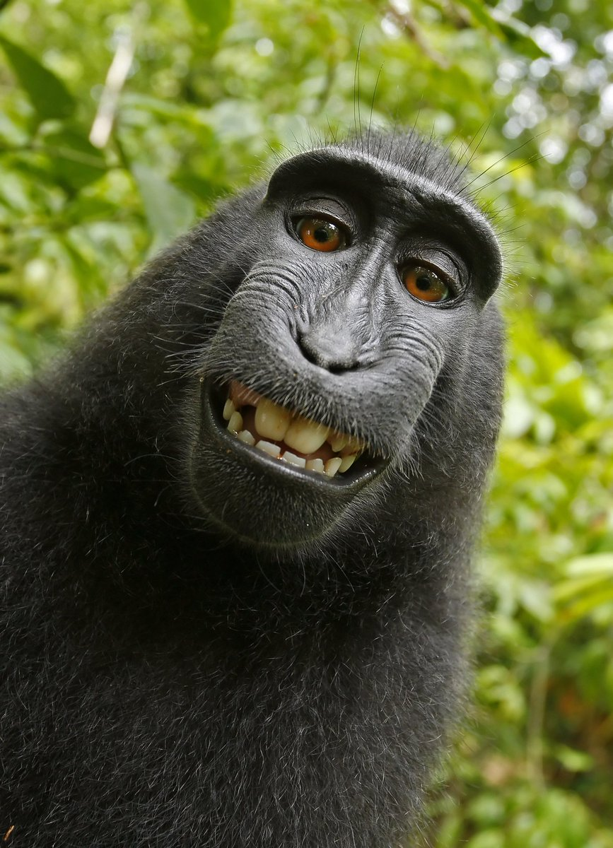 @jeffbakalar @DanRyckert @mmahardy Dan, I love you but the resemblance is uncanny.