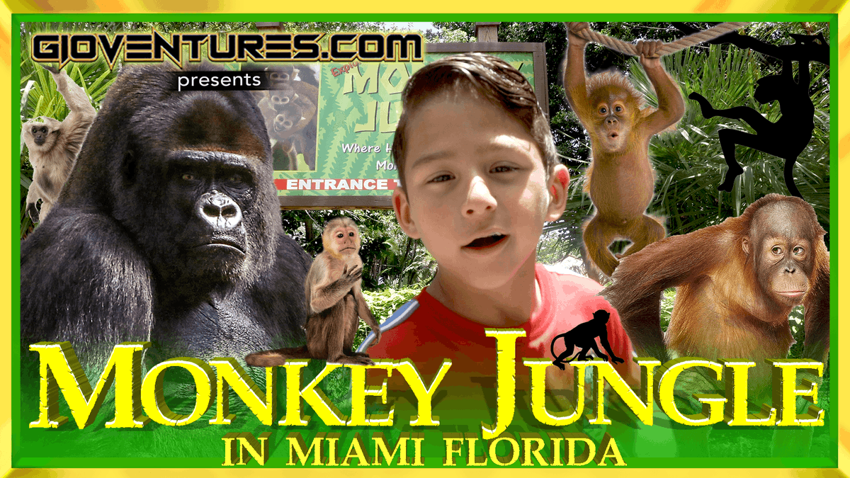 @VISITFLORIDA Hey GioVentures Fam! Check out Monkey Jungle in Miami, Florida. Thanks and Subscribe Today #gioventures #monkeyjungle #miami #monkeys #wildlifepark #florida #miamibeach #southflorida #monkey #gorilla