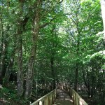 Image for the Tweet beginning: Bonito bosque para disfrutar en