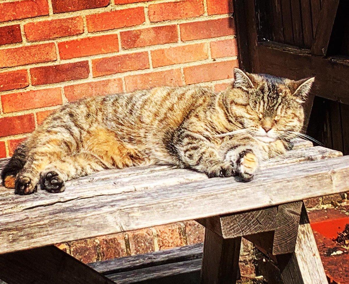 .@GeriPubCat enjoying the sun at @ButchersArmsOX3 yesterday @catsofoxford @boozewithmews