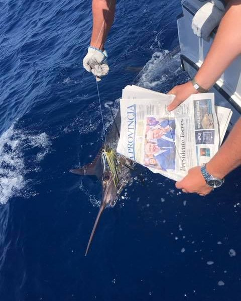 Grand Canary - White Marlin went 1-1 on Blue Marlin.