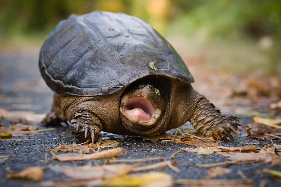 Февраля кораблем, прикольные картинки черепахами
