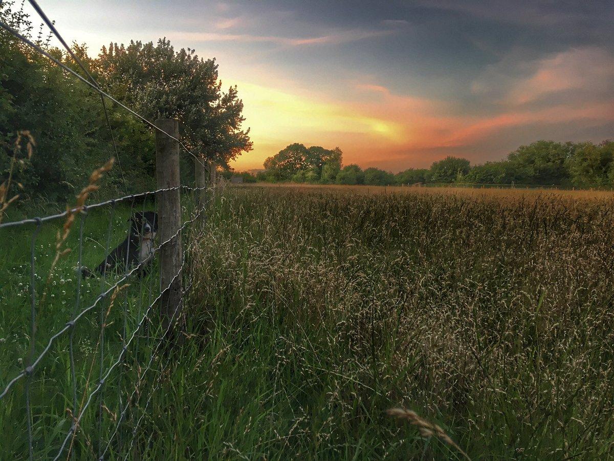 Lovely sunset this evening in Gosberton.<br>http://pic.twitter.com/k1E3hDdtMl
