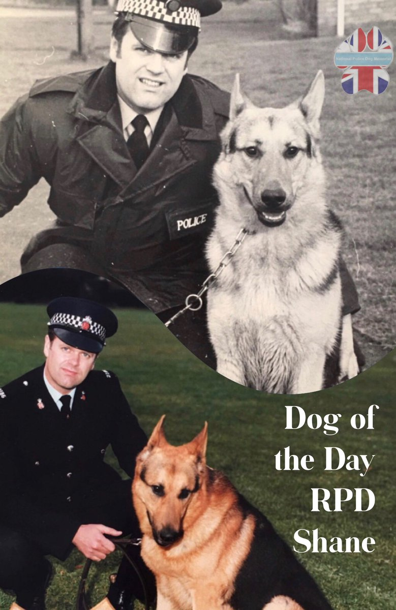 Our Dog Of The Day today is RPD Shane.   Shane was the 1st of many PDs for PC Sterry.  Sadly Shane crossed the rainbow bridge in 1990.  PC Sterry retired from Essex Police in 2002.   Thank you both for your service  #WeWillRememberYou @EPDogSection    https://www. k9memorialuk.co.uk/tribute-wall/e ssex/  … <br>http://pic.twitter.com/UuJ1NDFLKi