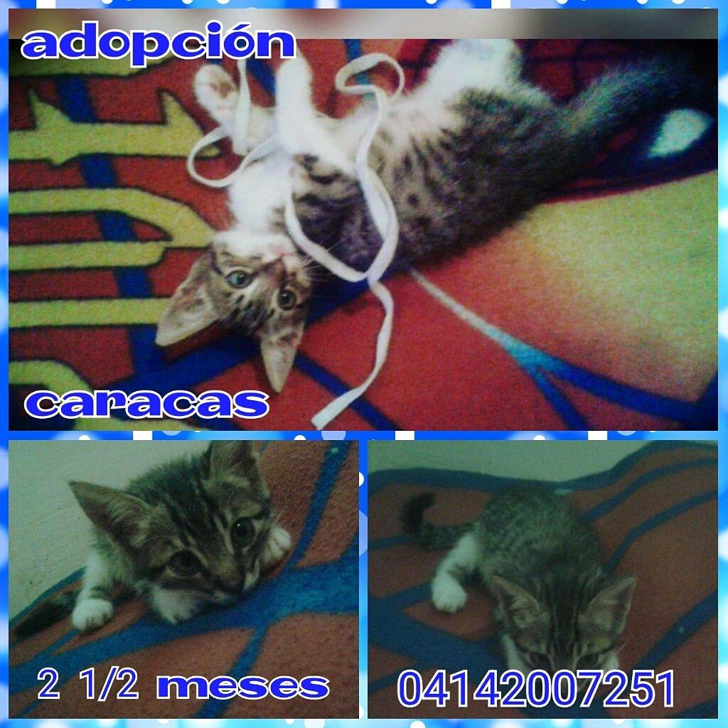 #CasoDeTerceros En Adopción 3 gatitos preciosos cariñosos se les busca hogares resposables están en caracas RT @PerroUsuario @CanalAnimal @Zapata_zos