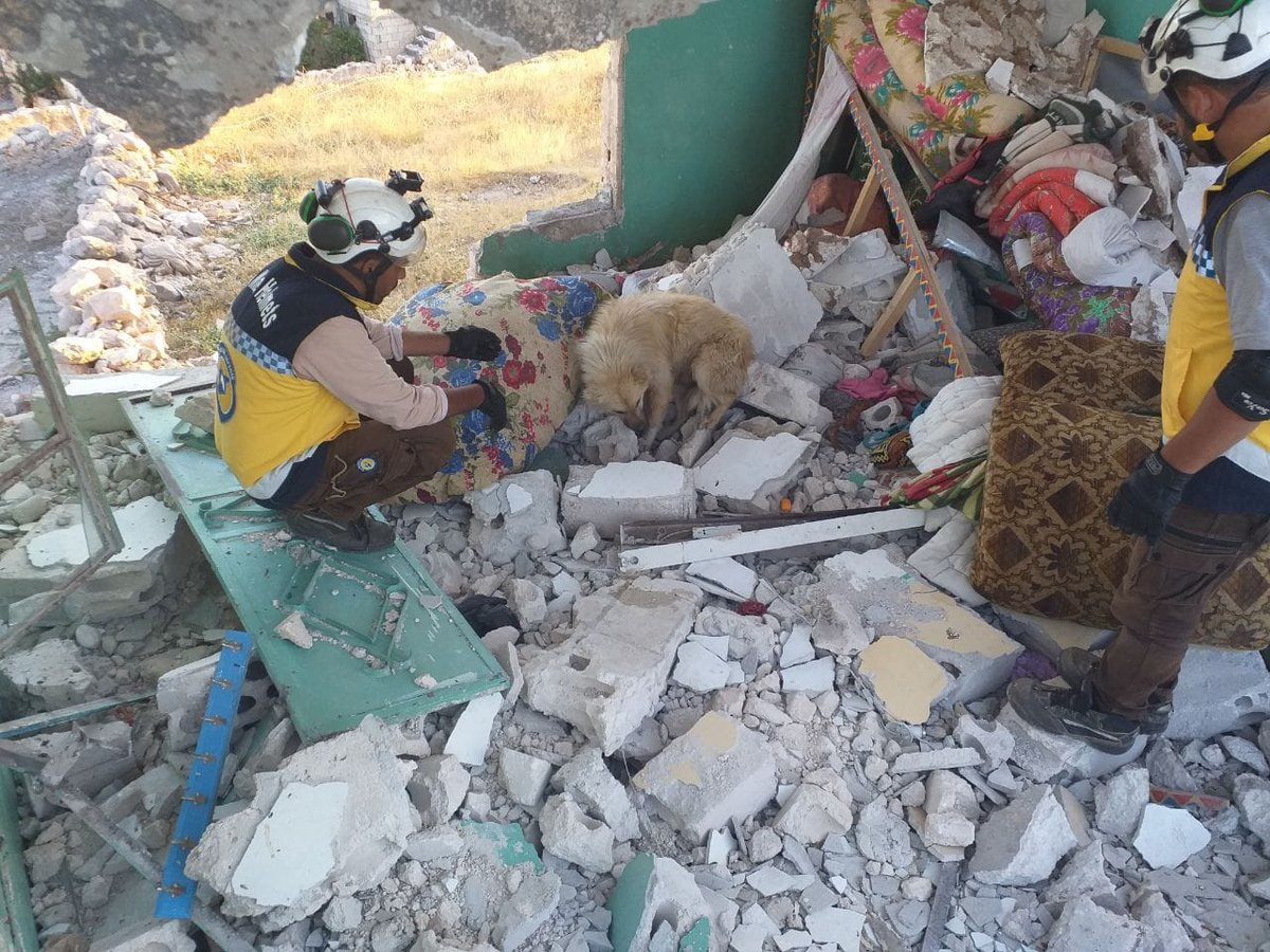 """""""Man's best friend""""  Even in the worst of times. This frightened dog was left behind when his owners had to flee. The walls of the home were destroyed and still he kept vigil, waiting for his family to return. Our White Helmets teams will find a home for him. #Syria #Hama<br>http://pic.twitter.com/LkIWtCZvhV"""