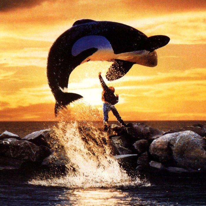 Instead of raiding Area 51 lets raid Seaworld and free the orcas #seaworldraid