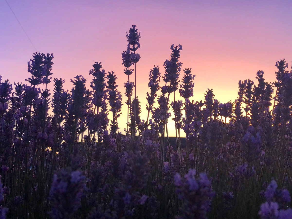 @LincsSkies Lavender sunset this evening, absolutely beautiful. #Lincolnshire <br>http://pic.twitter.com/tYXwv75n9t