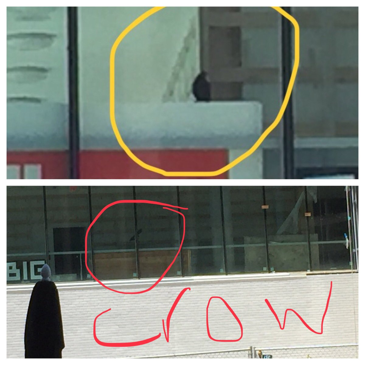 Spied today: construction crew working to get our building ready on time and two crows flying around the library, checking on progress! <a target='_blank' href='http://twitter.com/GilbaneBuilding'>@GilbaneBuilding</a> <a target='_blank' href='http://twitter.com/BIGstertweets'>@BIGstertweets</a> <a target='_blank' href='http://twitter.com/APSFacilities'>@APSFacilities</a> <a target='_blank' href='http://search.twitter.com/search?q=lovehb'><a target='_blank' href='https://twitter.com/hashtag/lovehb?src=hash'>#lovehb</a></a> <a target='_blank' href='http://search.twitter.com/search?q=stratfordrocks'><a target='_blank' href='https://twitter.com/hashtag/stratfordrocks?src=hash'>#stratfordrocks</a></a> <a target='_blank' href='http://search.twitter.com/search?q=TheHeightsBuilding'><a target='_blank' href='https://twitter.com/hashtag/TheHeightsBuilding?src=hash'>#TheHeightsBuilding</a></a> <a target='_blank' href='http://twitter.com/StratfordKG'>@StratfordKG</a> <a target='_blank' href='https://t.co/JQOf5nXVNb'>https://t.co/JQOf5nXVNb</a>