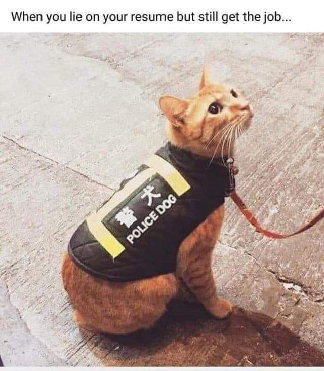 My cousin Barney will do anything to achieve his goal. #cats #CatsOfTwitter #JustSaying #Meow