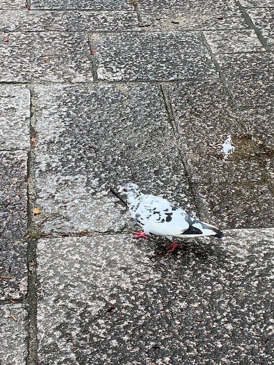 大阪城でブチコ発見
