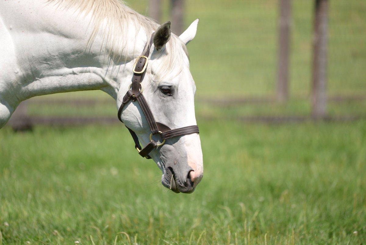 んじゃあ俺もサトノゴールド優勝祭りに乗っかるかな!! せがれの初勝利おめでとう!! あなたとの思い出は2012有馬記念でだいぶ儲けさせてもらった事とと2015宝塚記念で絶対なんかやらかすと思ってたらものの見事にゲートで大暴れしてくれたことでした 笑  #ゴールドシップ #サトノゴールド