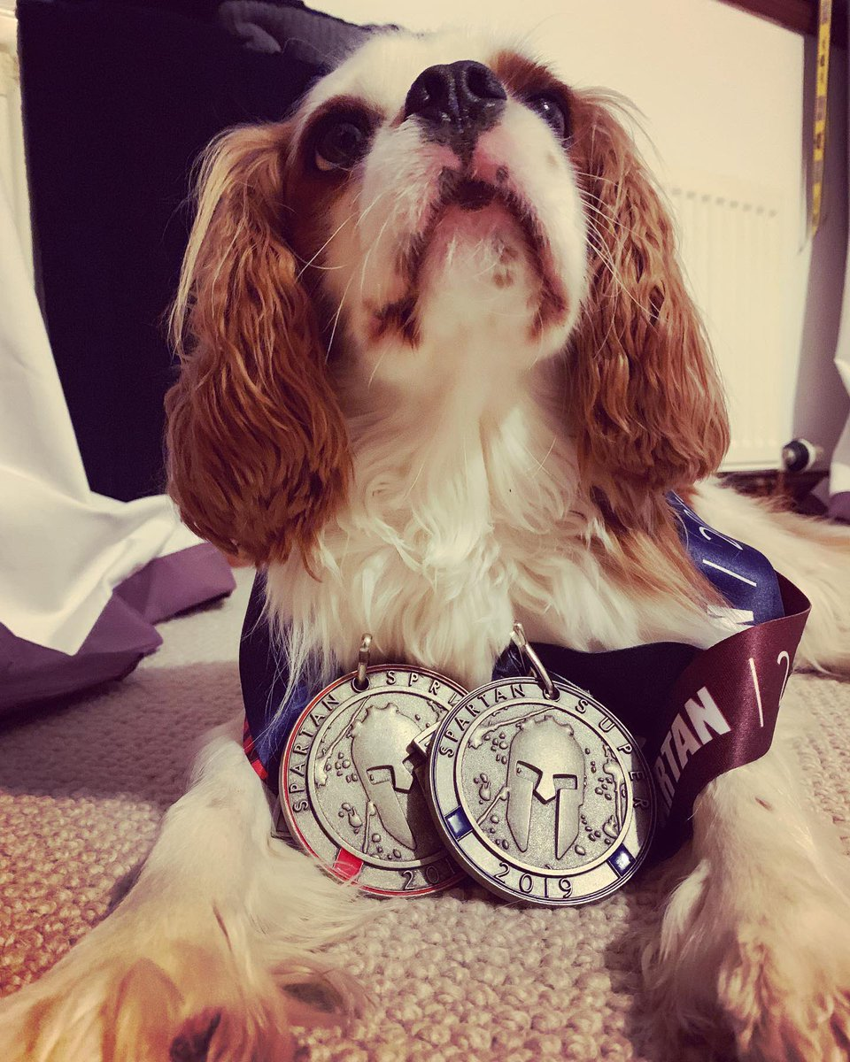 Post @spartanraceuk blues made better by the pooch checking out the #medals gained - nice addition to the medal evolutionary journey since 2014. Looking forward to getting my #beast medal in Perth later this year #trifecta #trifectatribe #OCR