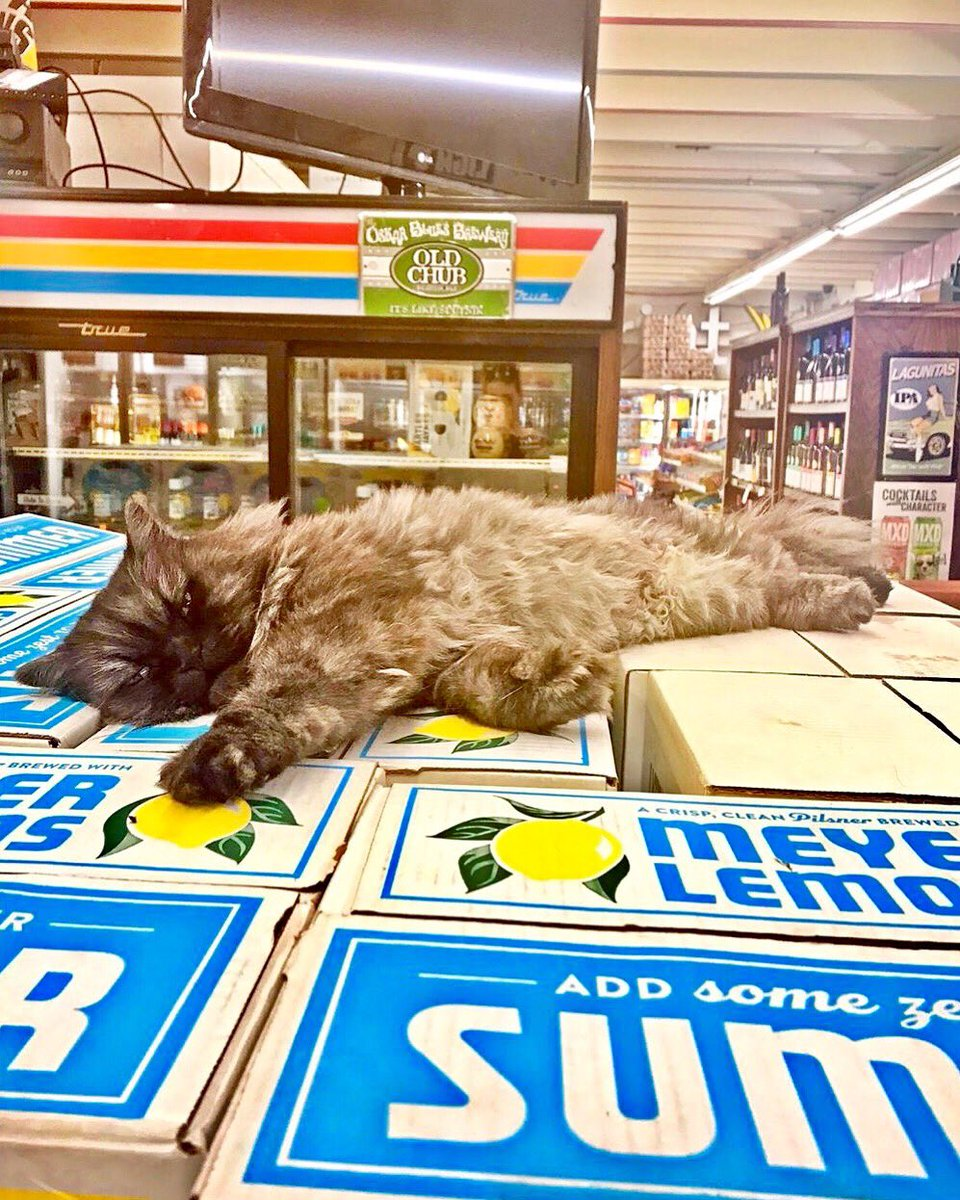 Bodega Cats (@Bodegacats_) on Twitter photo 15/07/2019 11:10:02