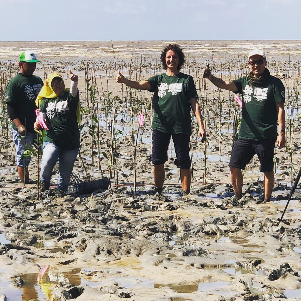 Our team is planting 16,500 mangrove trees in the Seruyan district! We have an amazing team who are truly committed. #Mangroveplanting