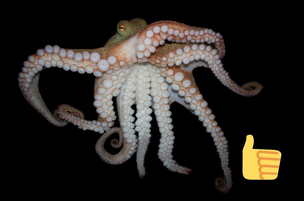 Uvážíte-li znalost angličtiny našeho pana prezidenta, jaký obrázek si představí, řeknete-li před ním slovo octopussy [oktopasy]? Hlasujte v komentáři.  #anketa #chobotnička #hooters #prezident #Zeman