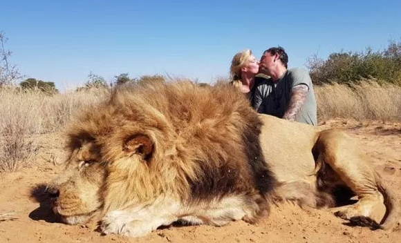 Sick trophy hunting couple kiss over corpse of magnificent lion they killed...