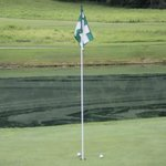 Image for the Tweet beginning: Nothing but birdies here at