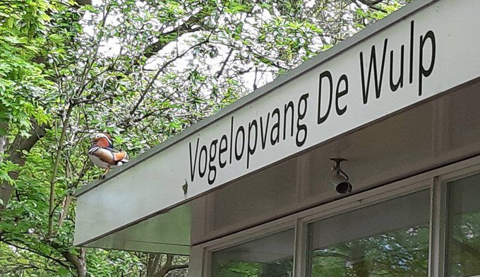 Vogelasiel De Wulp dringend op zoek naar lakens en handdoeken https://t.co/0I3QQCupM7 https://t.co/EsEIi8VU7B