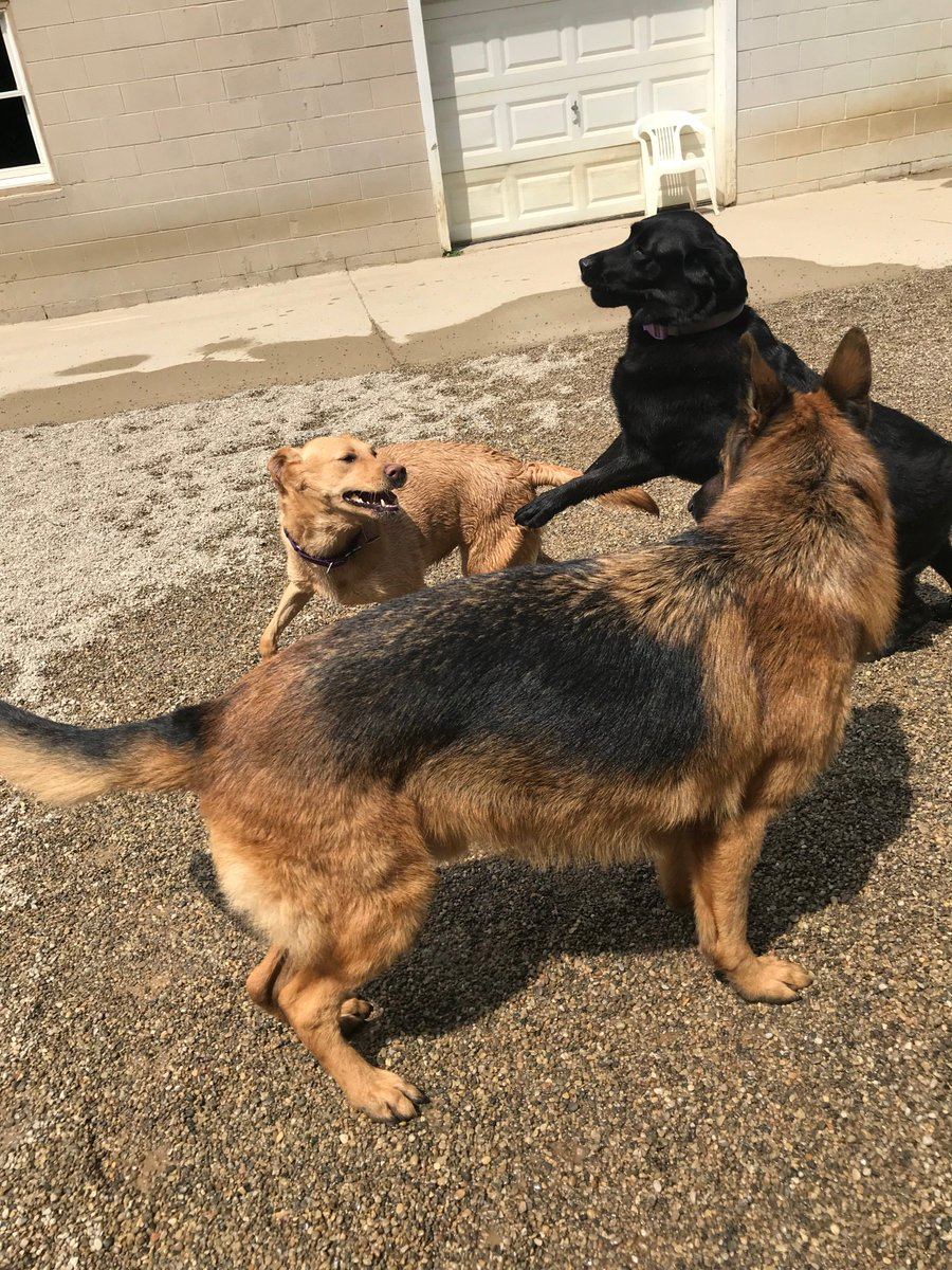Bracken, Greta and Clary love playing together