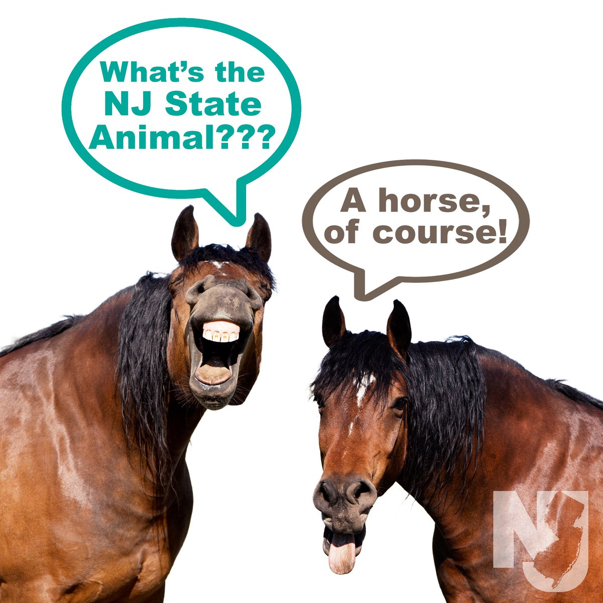 New Jersey On Twitter New Jersey Loves Horses And Horses Love New Jersey Did You Know That New Jersey Has More Horses Per Square Mile Than Any Other State It S Only Fitting
