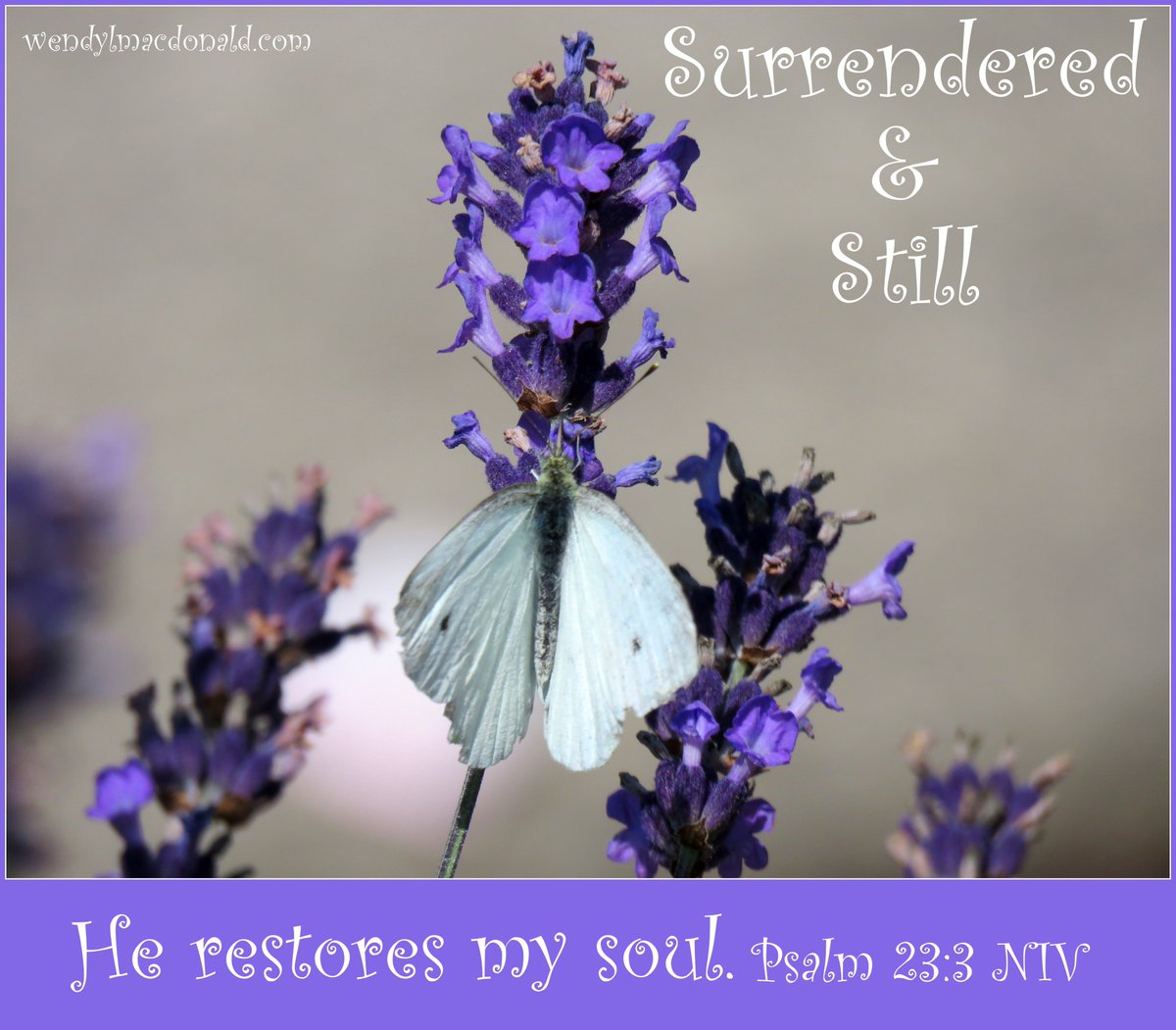 God restores my soul When I am still And surrendered To His perfect will God restores my soul When I give Him praise And relinquish fear To His Holy Name. ~ wlm #mondaythoughts #poetry<br>http://pic.twitter.com/QLrwzTDetS