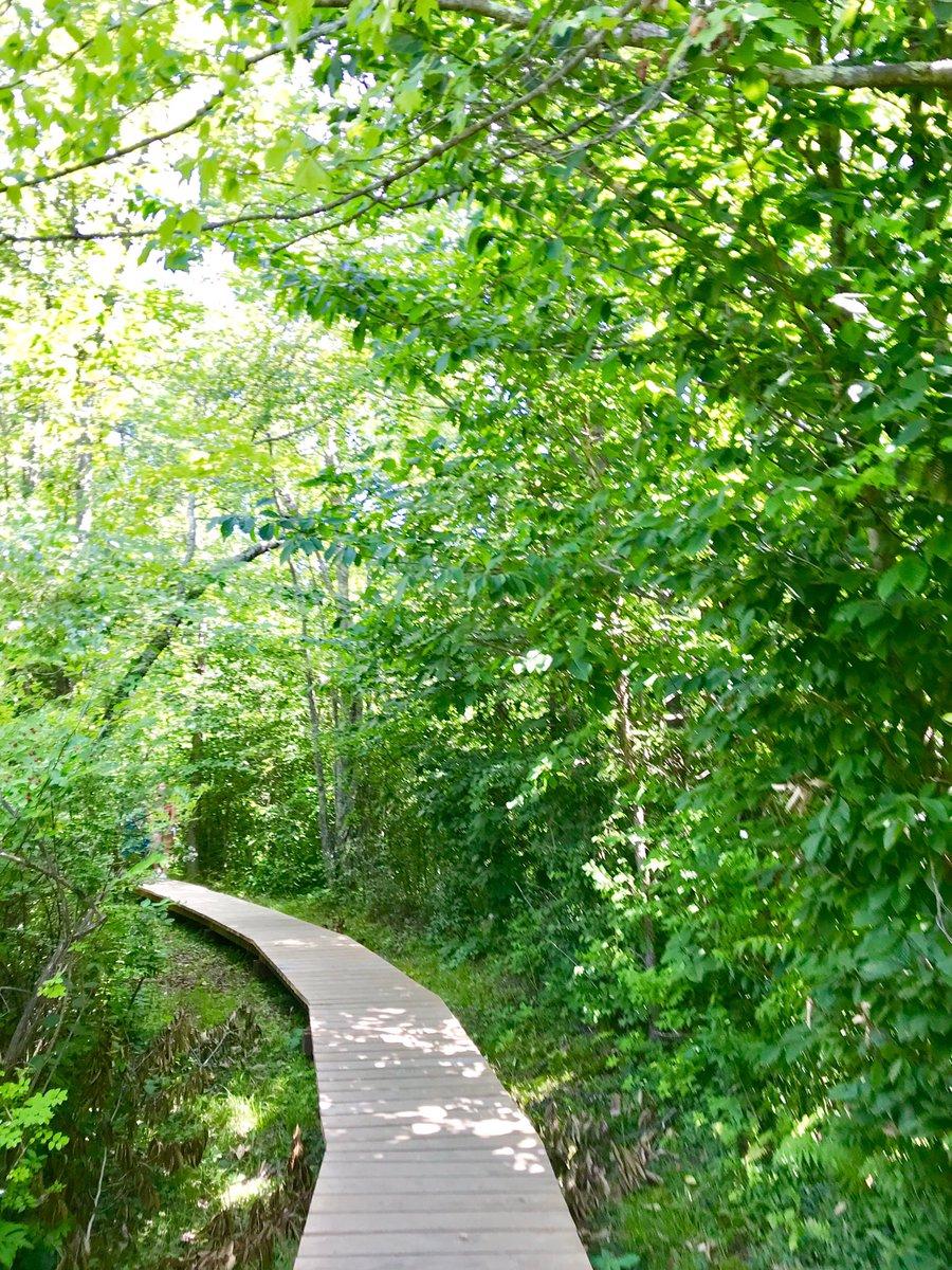 Slow deep breaths.  #hike #meditation #breathe #natureheals 🌿✨