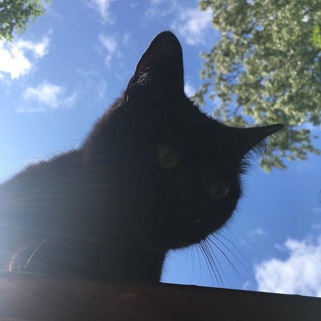 She has the high ground #cat #catsofinstagram #pet #petsofinstagram #blackcat #bluesky https://ift.tt/2LVK2qj