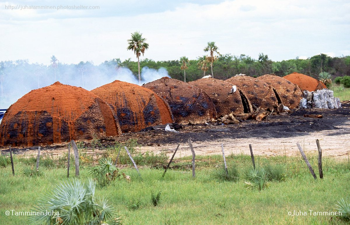 Hornos de carbón vegetal en el Chaco, enero de 2000 #Chaco #Paraguay #carbon