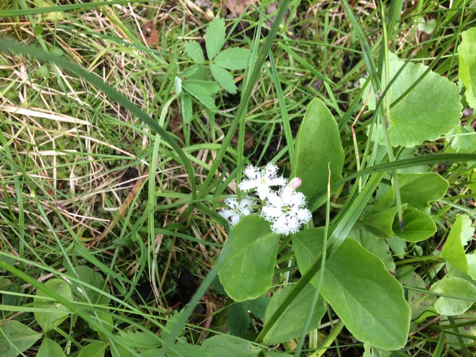 Nice looking flowers, i`ve never seen before, in Rypefjord #Flowers #Finnmark #wilderness #Nordic