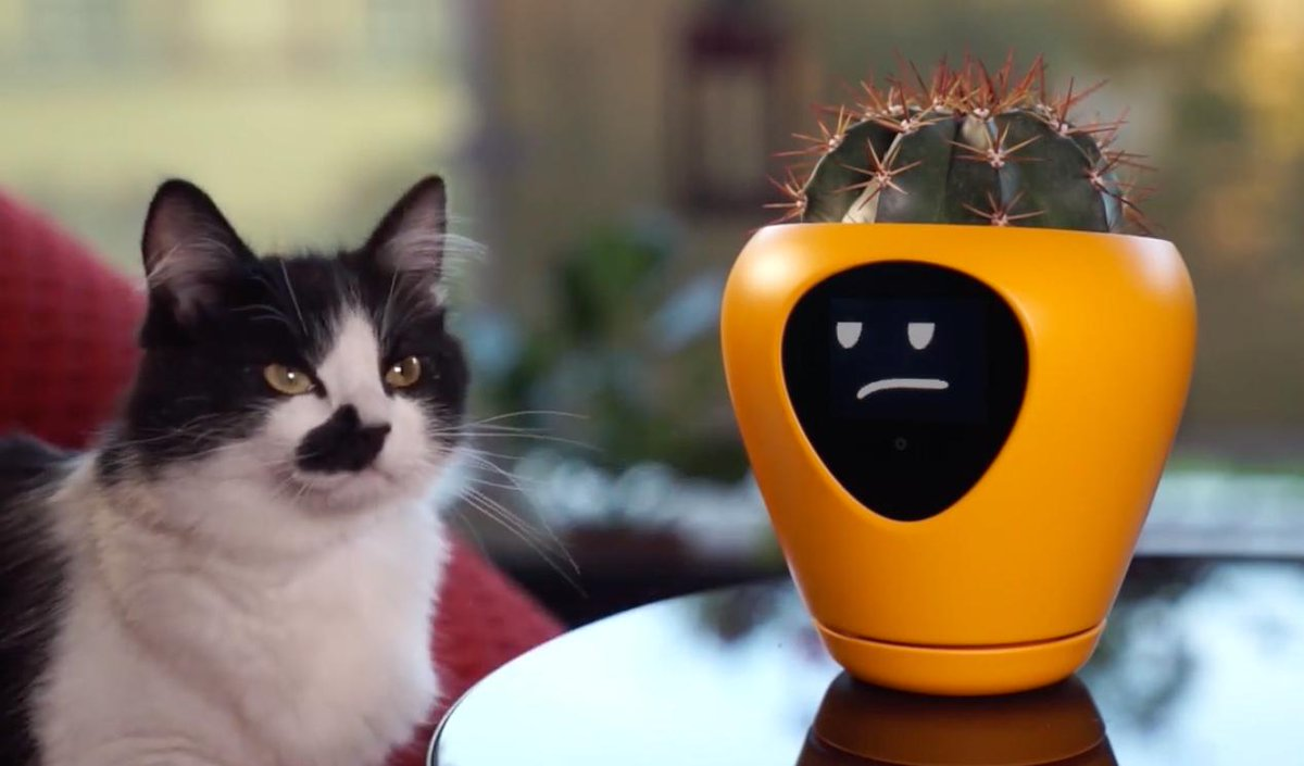 We bet some of you could use this smart planter, designed to measure soil moisture, temperature, & light exposure and let you know—via LCD face—how its doing. bit.ly/2ShZD4P (skeptical cat not included)