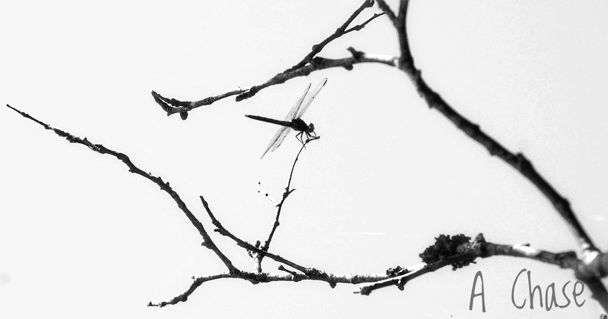Dragonfly taking a break on a branch. #photography #blackandwhitephotography #dragonfly