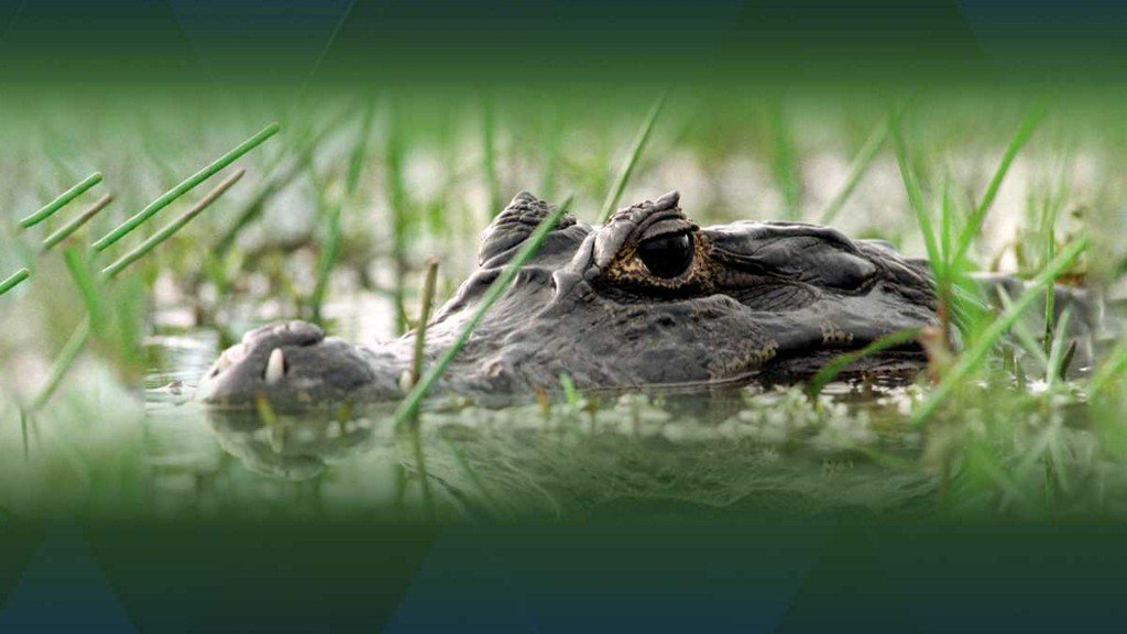Flushing drugs down toilet could lead to 'meth-gators,' police say wyff4.com/article/flushi…