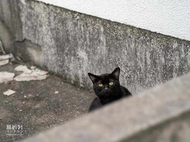 #猫#cat#ねこ#外猫#catstagram #instacat #streetphotography #catgram#portrait #snap #snapshot #catphoto #catlover #picneko #写真好きな人と繋がりたい https://ift.tt/2lvmYU5