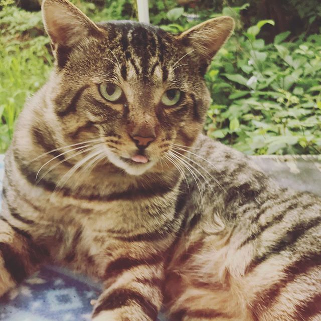 野良の顔つき。今日も生きんぞ。 #cat #猫 #ねこ #instacat #catstagram https://ift.tt/2k0LvAf