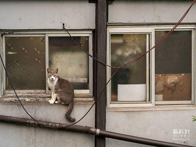 #猫#cat#ねこ#外猫#catstagram #instacat #streetphotography #catgram#portrait #snap #snapshot #catphoto #catlover #picneko #写真好きな人と繋がりたい https://ift.tt/2ls8pAD
