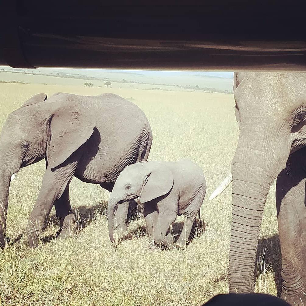 Saying Hello. #Elephants #MaasaiMara #Kenya #Africa #ExploreMore #Safari #ExploreAfrica #Adventure #Wildlife #LiveLifeWell #FriendlyPlanet @FriendlyPlanet #Travel December 2017