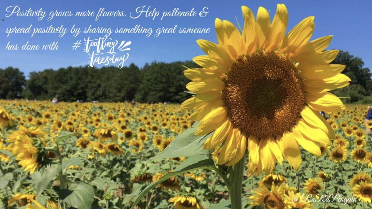 Pollinate your school & #PLN with positivity & grow more flowers with #TootlingTuesday!